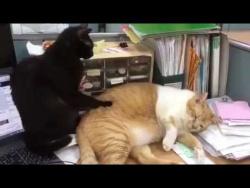 Свежая подборка кошачьих приколов!!! Ну очень смешные коты!!!