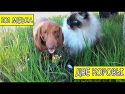 Русское видео про животных Приколы про собак новые видео смешное про собак и про кошек