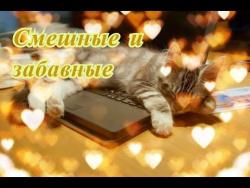 Прикольные животные кошки собаки Позитив Создай себе хорошее настроение