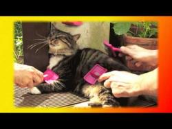 Cмешное видео про кошек и котят Для детей и не только Создай себе хорошее настроение