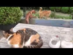Кошка заступилась за своего друга