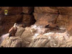 Дикая природа России  4 из 6  Кавказские горы