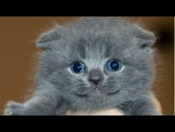 Приколы с котами - Топовая Подборка! Funny Cats Complation 2016