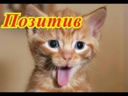 Смешное про животных. Мир позитив.  Кошки. Собаки. Fanny animals Создай себе хорошее настроение