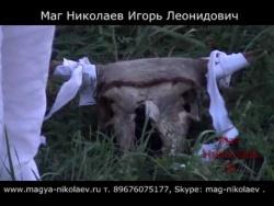 Кладбищенский приворот на череп быка. Эффективный приворот через кладбище. США.