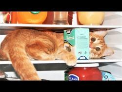 Спецвыпуск Про Животных Приколы с Котами   Смешные кошки приколы про кошек и котов 2017 Коты и Холод