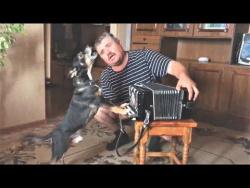 Животные и Дети Приколы с животными 2018 Смешные Кошки Милые Собаки и Очень Плохая Музыка