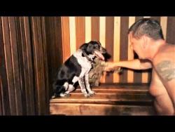 Смешные собаки и Смешные кошки Идут в баню На новый год 2018 Pets in sauna Приколы с животными