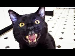 Кот говорит: Открой мне дверь и Пойдём поговорим И песня Про Бабу