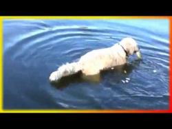 Смешные приколы про животных видео Для детей и не только Создай себе хорошее настроение