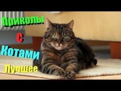 Смешные коты 2017. ТОПовая подборка. Лучшие Приколы с котами. Funny Cats Compilation 2017