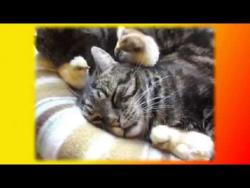 Прикольные животные Видео о животных Создай себе хорошее настроение