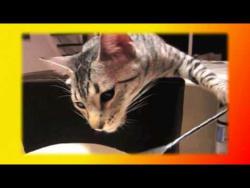 Смешные кошки и котята Для детей и не только Создай себе хорошее настроение
