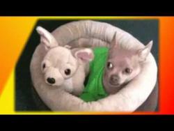 Смешные приколы про животных видео Создай себе хорошее настроение