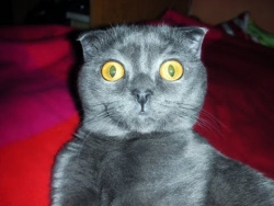Лучшие приколы с котами - ТОПовая подборка! (Февраль 2017)  / Funny Cats Complation 2017