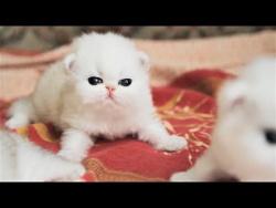 Cute Baby Cat UHD 4K Little Kittens かわいい子猫 #140 Самые милые котята и котятки 2018 süße Kätzchen