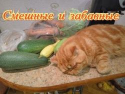 Смешные и забавные. Кошки. Собаки. Fanny animals Создай себе хорошее настроение