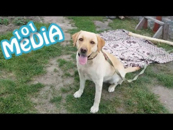 Смешные коты и собаки новый выпуск от 21.05.2017 ПРИКОЛЫ с животными
