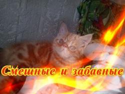 Смешное про кошек собак Позитив Fanny animals Создай себе хорошее настроение