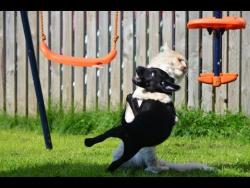 Котенок дзюдоист / Kitten judoka