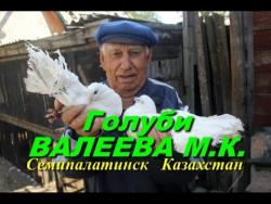 Голуби  Валеева МК  Семипалатинск  22 авг.2017