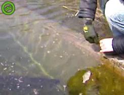 осторожно злая рыба