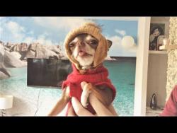 Смешные собаки Приколы про собак Funny Dogs 2017 #5 Приколы с собаками 2017  Собаки в шапке