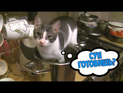 Угарные ПРИКОЛЫ С ЖИВОТНЫМИ подборка с озвучкой Смешные Видео Приколы про Животных 2018