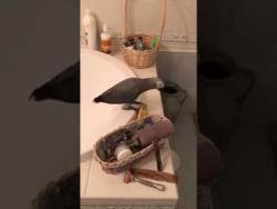 Когда кот и попугай в ванной комнате