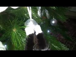 Кошка ворует игрушки с новогодней ёлки