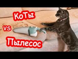 Смешные коты 2017 ТОПовая Подборка страх им не писан Мой пылесос панически боится кота ПРИКОЛЫ МАЙ