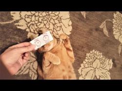 Смешные коты и кошки Приколы с котами и кошками август 2017 Подборка про котов