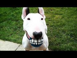 Приколы про кошек и собак Смешные животные Funny Animals Cute Pets