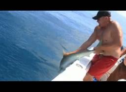 Человек и акула