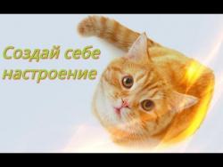 Забавные животные видео кошки, собаки Самые смешные животные. Для детей Создай себе настроение
