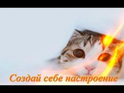 Самые смешные животные Кошки Собаки Для детей Fanny animals Создай себе хорошее настроение