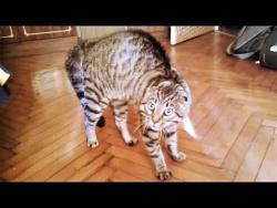 Приколы с животными 2018 Смешные видео про котов и про собак  Поломки котов и поцелуи в засос