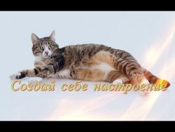. Смешное видео про животных.Кошки,собаки Позитив,Создай себе настроение