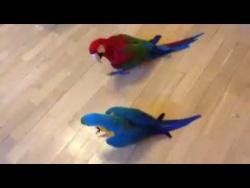 """Игра попугая и бладхаунда """"Достань друга"""""""