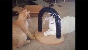 Парочка причин завести себе кота