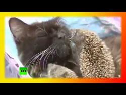 Прикольные кошки Позитив Для детей Fanny animals Создай себе хорошее настроение