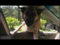 Cмешные приколы и фейлы с животными Угарные приколы и пранки про животных Подборка Август 2017