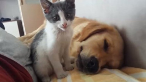 С таким котом не выспишься