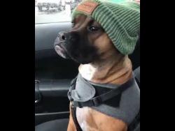 Самая серьезная в мире собака