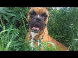 СОБАКА ЧИХАЕТ НА КАМЕРУ НА СЪЕМКАХ ВИДЕО Смешные собаки чихают Будьте здоровы!