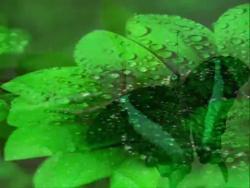 Зеленый (Здоровье) - Хромотерапия Corciolli