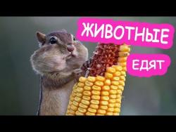 Приколы про животных смешные животные кормим наших  питомцев кошек очень смешно и позитивно едят