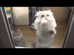 Танцующий кот / Dancing cat