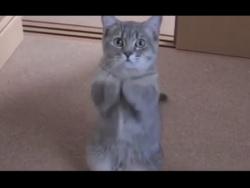 Милый котик просит покушать.