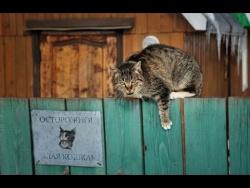 Сторожевой кот